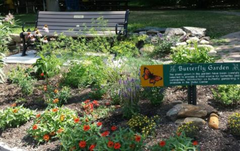 Beautiful Butterfly Gardens