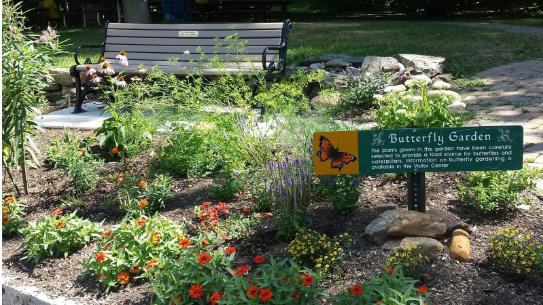 School Butterfly Garden
