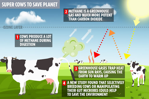 Depiction+of+how+cows+affect+global+warming+due+to+their+digestive+system